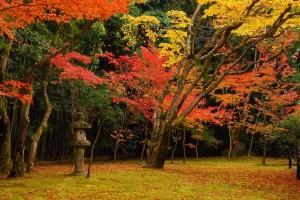 京都紅葉 050